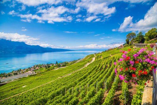Das Weinland Schweiz hat eine Tradition, die bis in die Antike reicht. (Bild: canadastock – Shutterstock.com)
