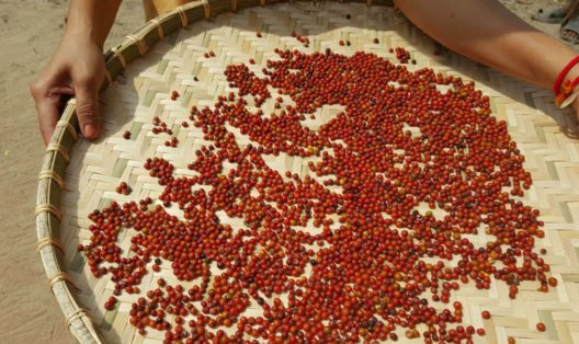 Martin Burhenne baut seinen Kampot Pfeffer auf der eigenen Farm The Pepper Hill an. (Bild: The Pepper Hill)