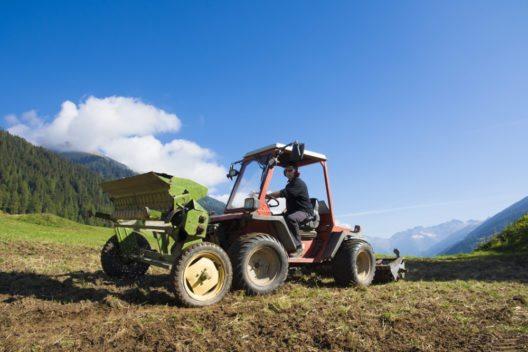 Nachdem der Roggenanbau im Obergoms fast komplett aufgegeben wurde, bauen heute dank der Genossenschaft Grafschaft Kultur wieder mehrere Landwirte Bergroggen an.