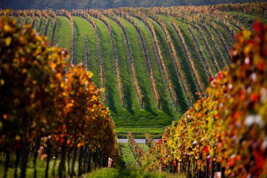 Weingut Rotweine Lang (Bild: © Michael Stephan)